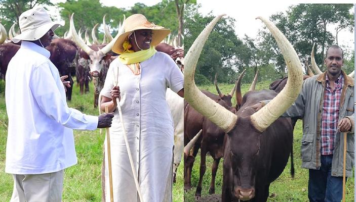 Min. Tumwebaze Emulates President  Museveni On Cattle Farming