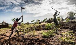 Bidi Bidi Refugee Farmers Sow Seeds Of Change Through Agriculture