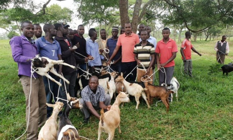 Min. Tumwebaze's War Against Poverty With Goat Rearing Project Bear Fruits In Kamwenge