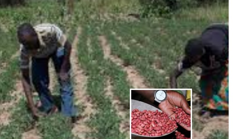 Farmers' Guide With Joseph Mugenyi: Best Tips On Growing Ground Nuts