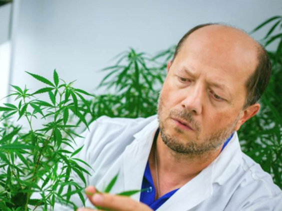 'Cannabis Could Control Spread Of COVID-19'-Researcher, Gov't Pledges To Fund Project With $1.1 Billion