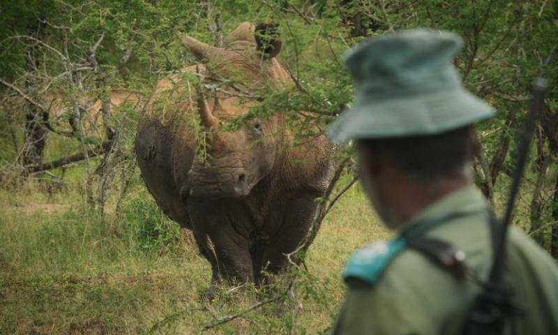 Terrible: Armed Poachers Gun Down Ranger In Kibale National Park