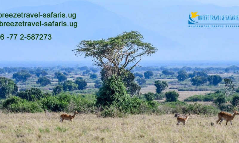 Breeze Travel & Safaris Takes Domestic Tourism To A Whole New Level!