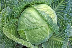 Farmers Guide: Limit Losses In Cabbage Farming By Practicing The Following Steps