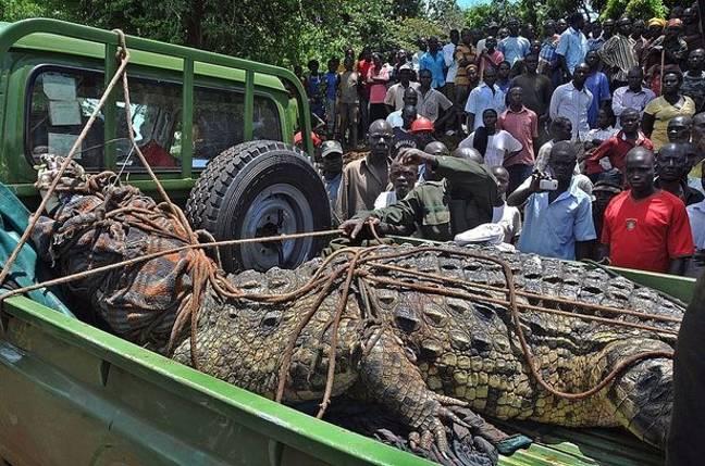 Bloodthirsty Crocodile Named After 'Osama Bin Laden' Terrorizes Village, Kills 80 People In Uganda