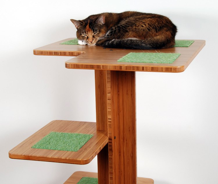 Cat on top of wooden cat tower