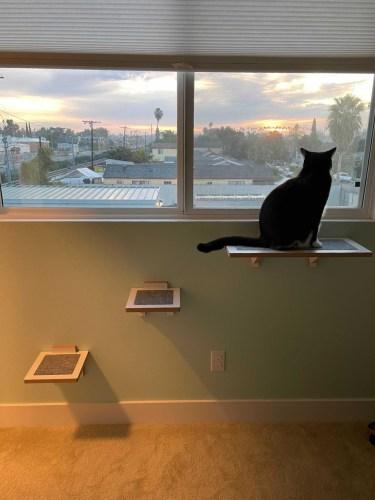 Burnside: Modern Wall Mounted Cat Perch photo review