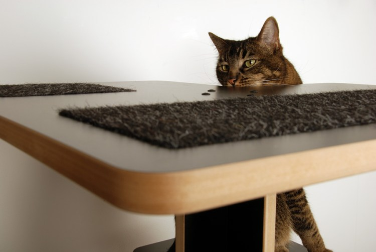 Closeup of cat peering over top of Baolab Cat Tower