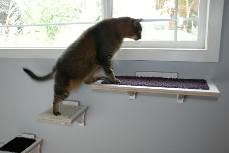 Cat using cat climbing shelf