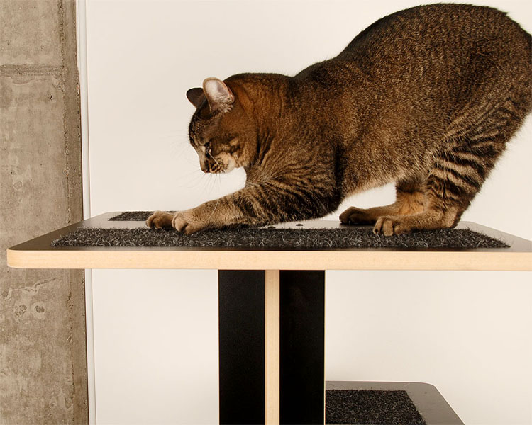 Baobab modern cat tower in black SDF and black cat inserts with cat scratching