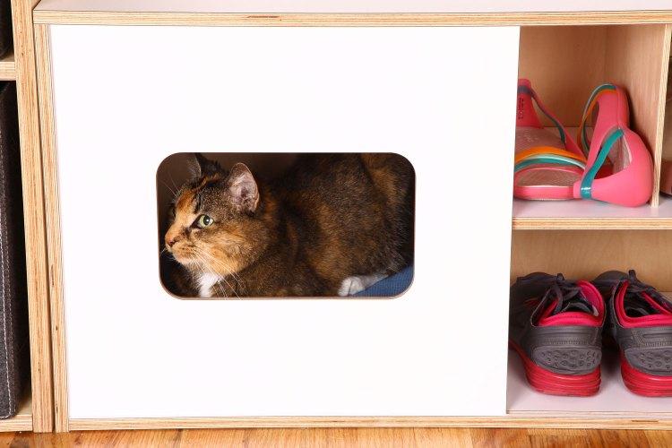 Cat inside the modern shoe bench