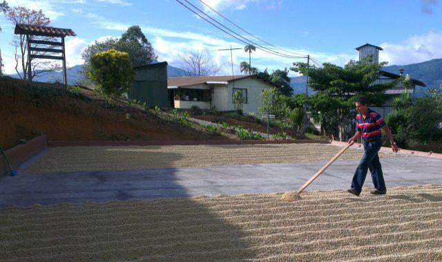 Luis raking