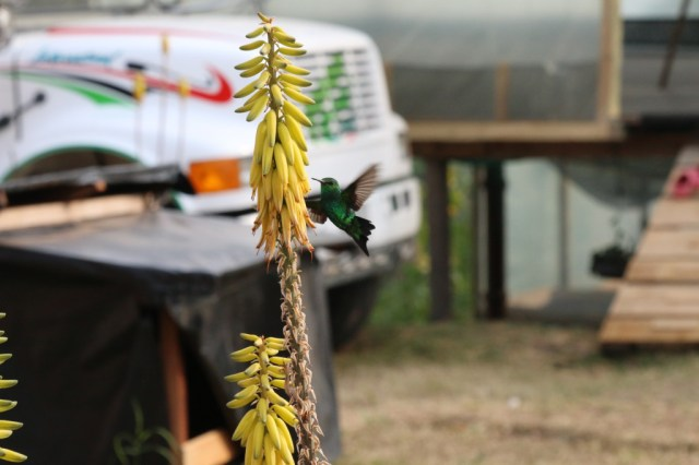 A humming bird with the bus in the background
