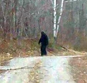 Bigfoot / Sasquatch Photo