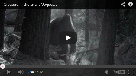 Analyze videos of Bigfoot & Sasquatch.
