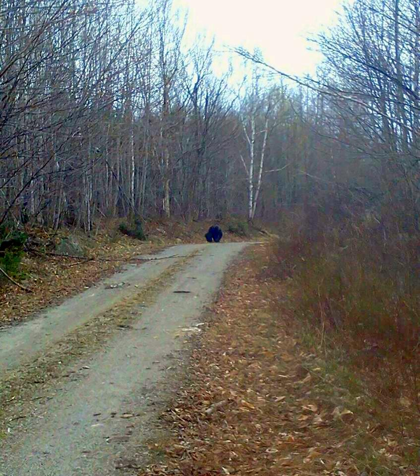 Recent Bigfoot Photos from Maine