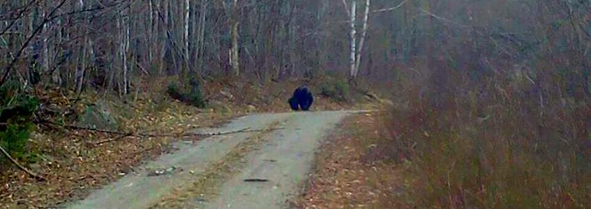 Bigfoot Pic from Maine.