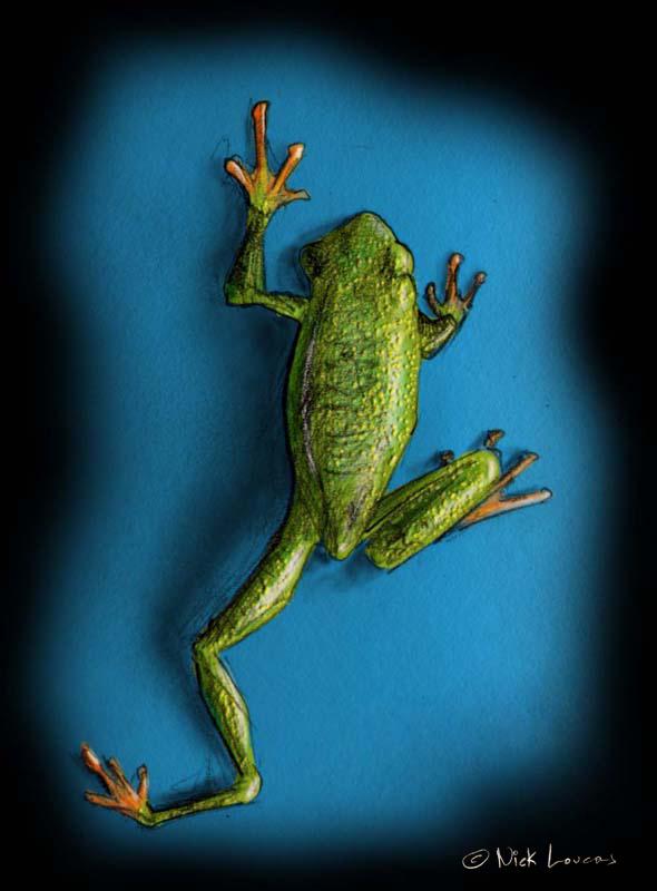 frog1 copy