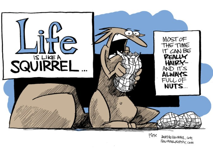 life is like a squirrel...bob the squirrel
