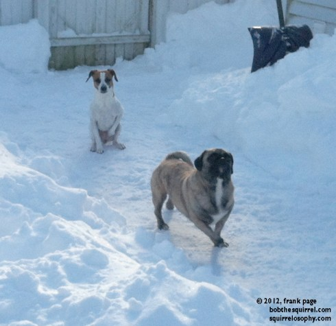 cold dogs winter snow