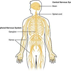 Nerves In Neck And Shoulder Diagram Shrub Graphic Symbols Pain Peripheral Neurogenic Nerve Shirley Ryan Important Features About The