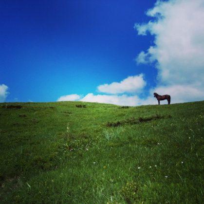 konj!