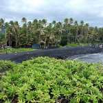 Hawaii's Punalu'u Beach