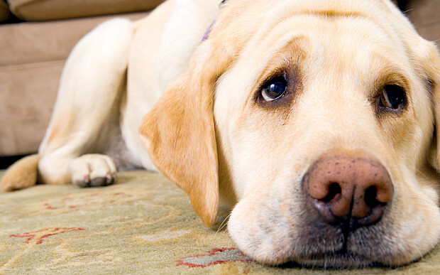 Vrsta psa otkriva inteligenciju vlasnika