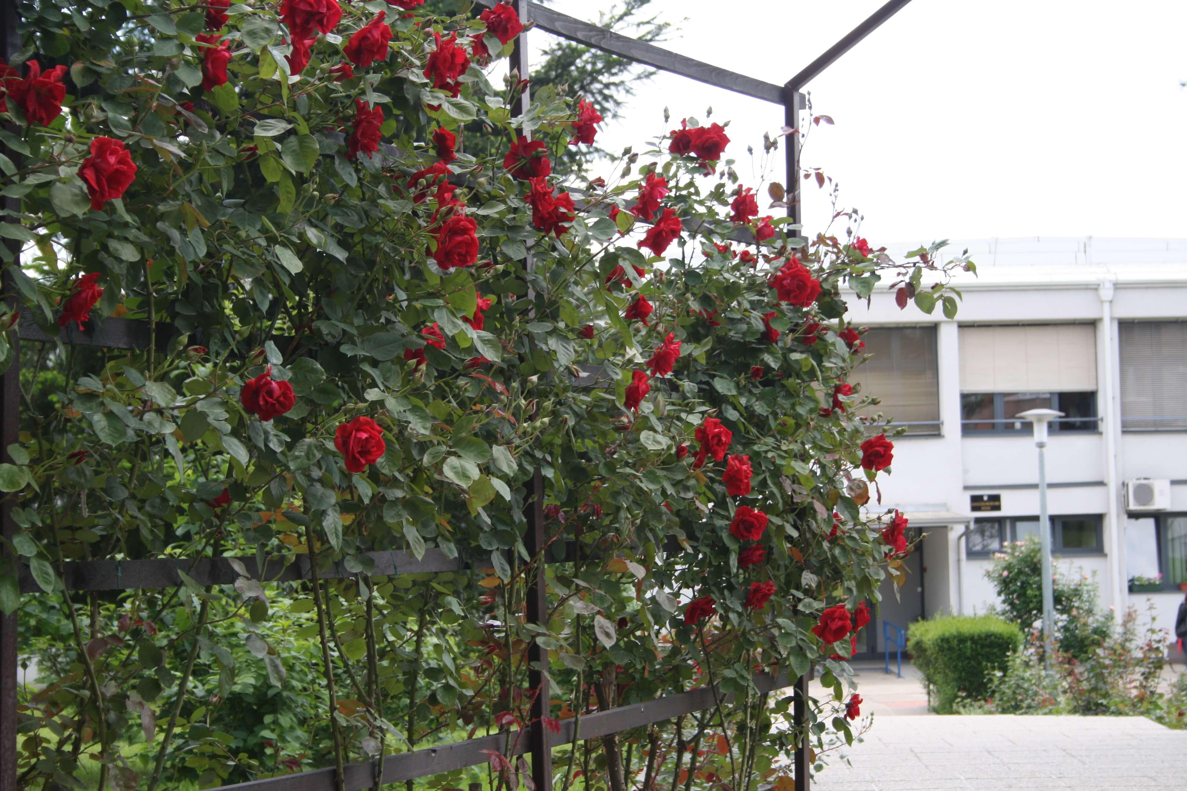 Najljepši školski vrt u Hrvatskoj nagrađen sa 10.000 kuna: Pogledajte kako su ga uredile ruke malih školaraca