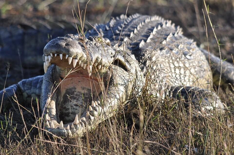Životinjsko carstvo namučilo maturante na ispitu iz Biologije: Pluća grabežljivog orla i krokodilov krvotok stvarali dileme