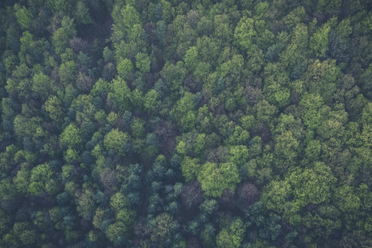 Imaš ideju kako spasiti hrvatske šume? Ovo je natječaj za tebe