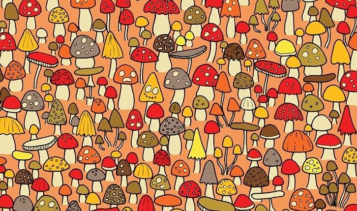 [Zadatak dana] Slika koja je zbunila mnoge: Vidite li miša među gljivama?
