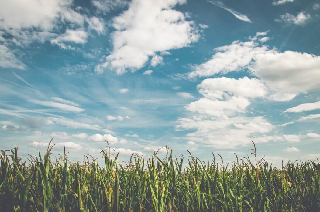 15 razloga zašto studirati poljoprivredu