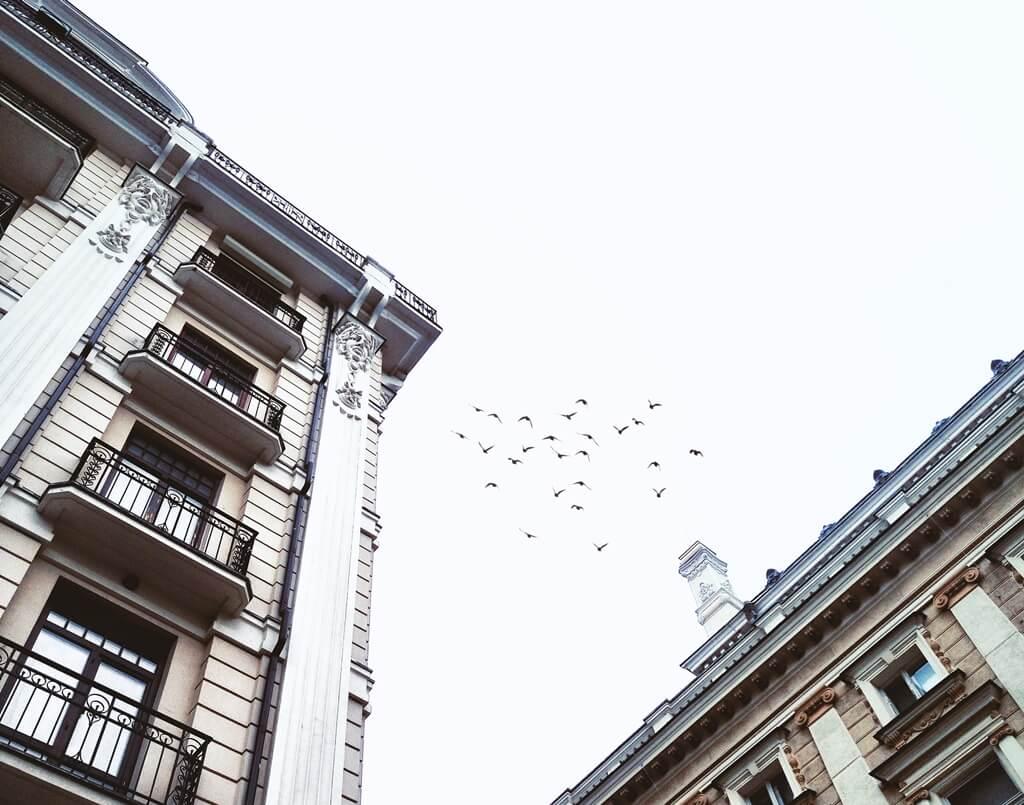 [Zadatak dana] Pokušajte odgovoriti na zanimljivo pitanje o pticama s ovogodišnje mature iz Psihologije
