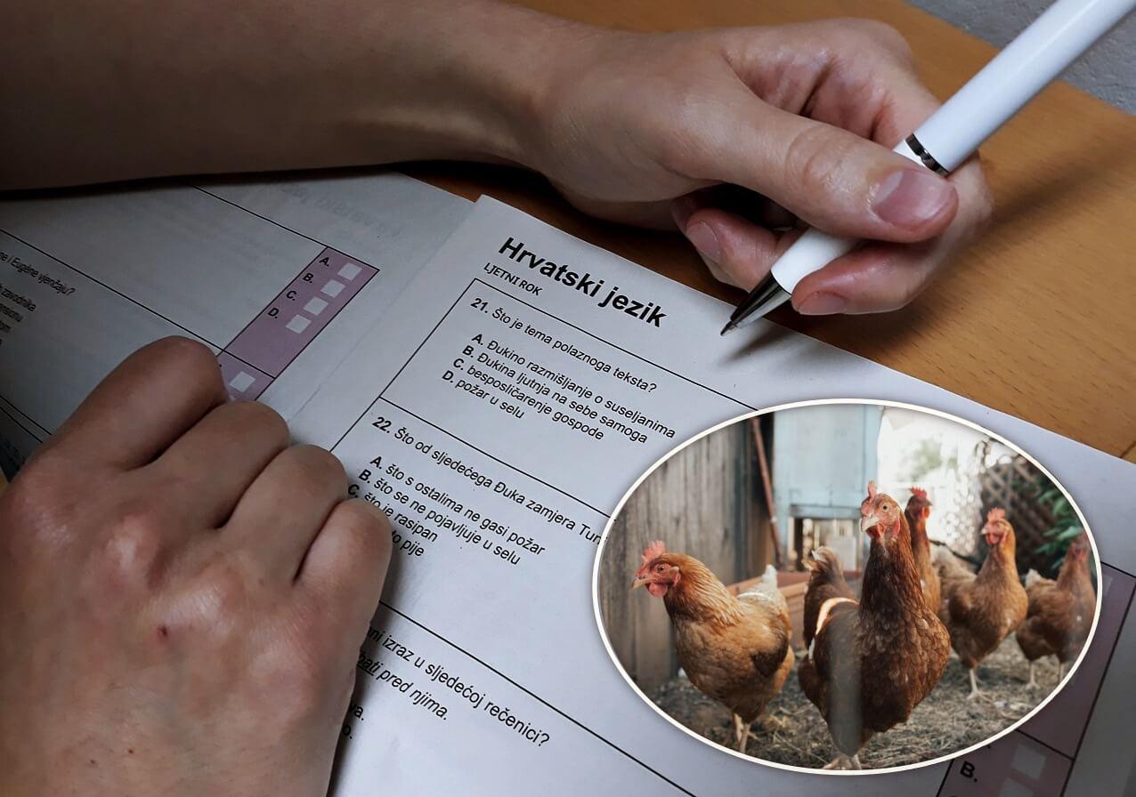 [Zadatak dana] Pitanje o kokošima s mature iz Hrvatskog nasmijalo je učenike, znate li odgovor?
