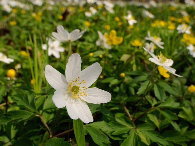 Services  Blumen senden Signale  die unverblmten