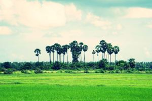 Jaffna Wallpapers
