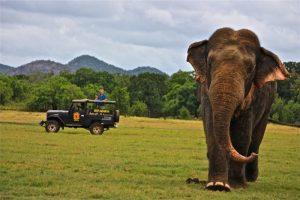 Minneriya national park habarana sri lanka