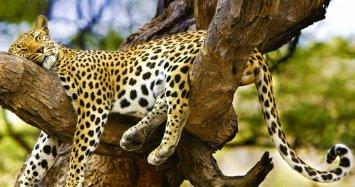 Wasgamuwa national park sri lanka wild life