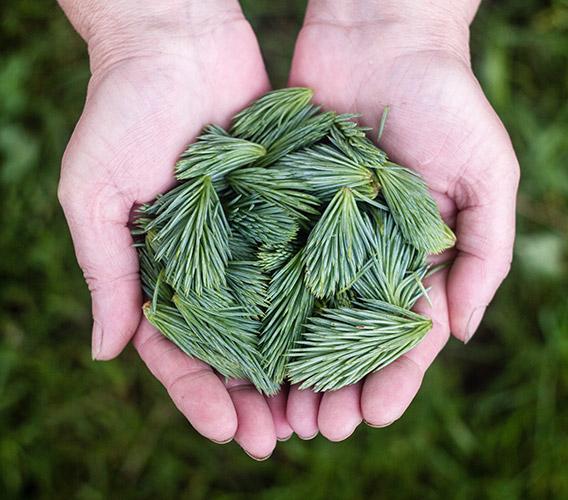 Holding Green