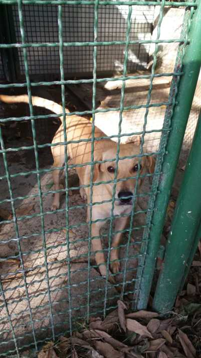 Cães esperam adoção. Foto: Divulgação