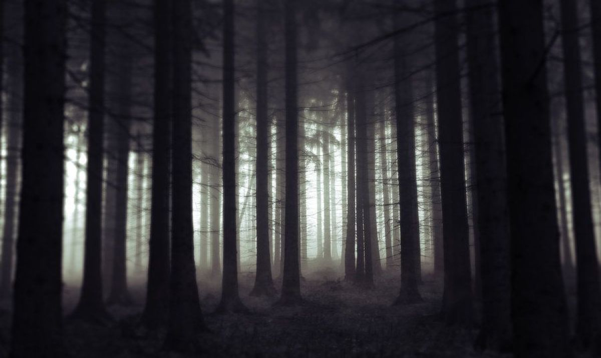 scary-woods-at-night-scary-woods-photo-dark-woods-mysterious ...
