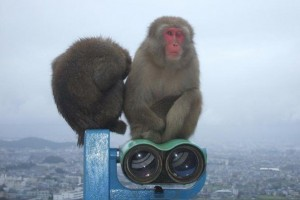 スミス英会話大津校 嵐山京都 The Year of the Monkey