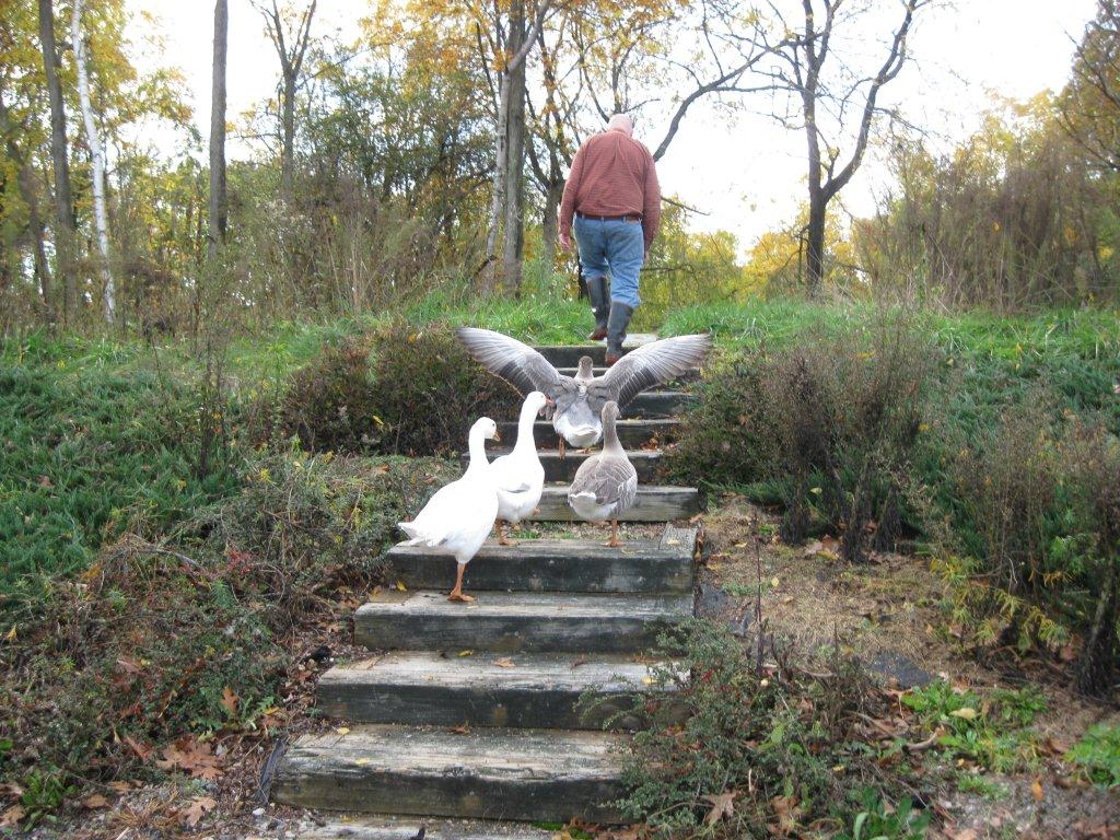 James and Geese
