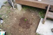 離れのデッキ下に植えました
