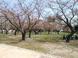 2013年4月4日・駿府城公園はすっかり葉桜
