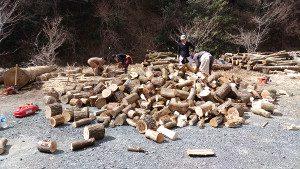 大量に伐りました、割りました