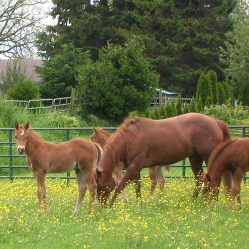 2010Foals
