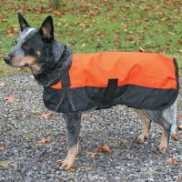 Dura-Tech Waterproof Dog Jacket in Dog Coats & Jackets at ...