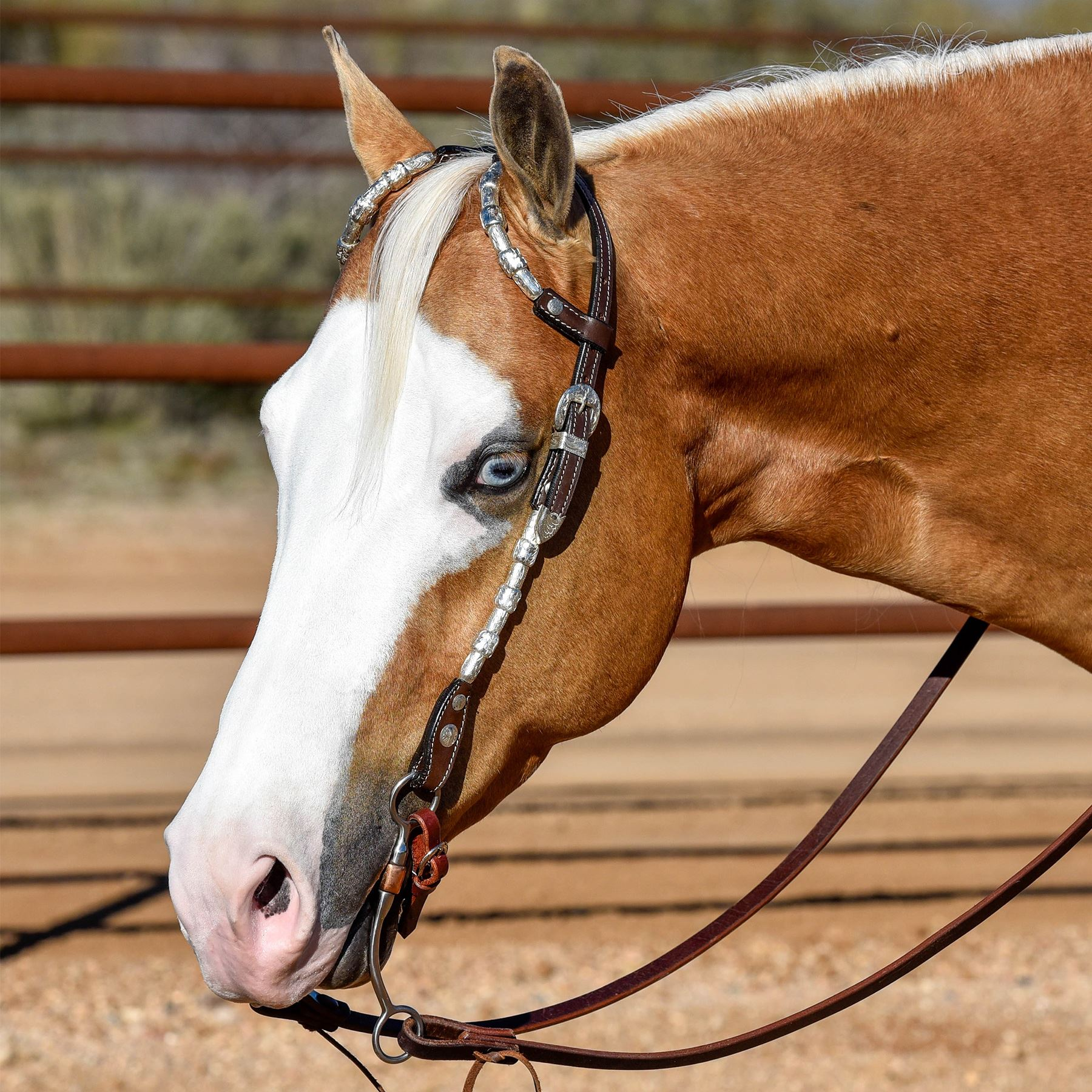 Raleigh Show Headstall In Show At Schneider Saddlery